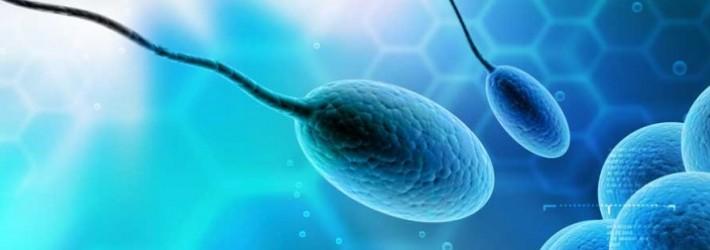 Sperm-Quality